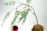 Make-a-Charlie-Brown-Christmas-Tree