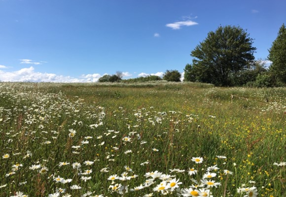 Early environmental works include tree planting and creating grassland meadows