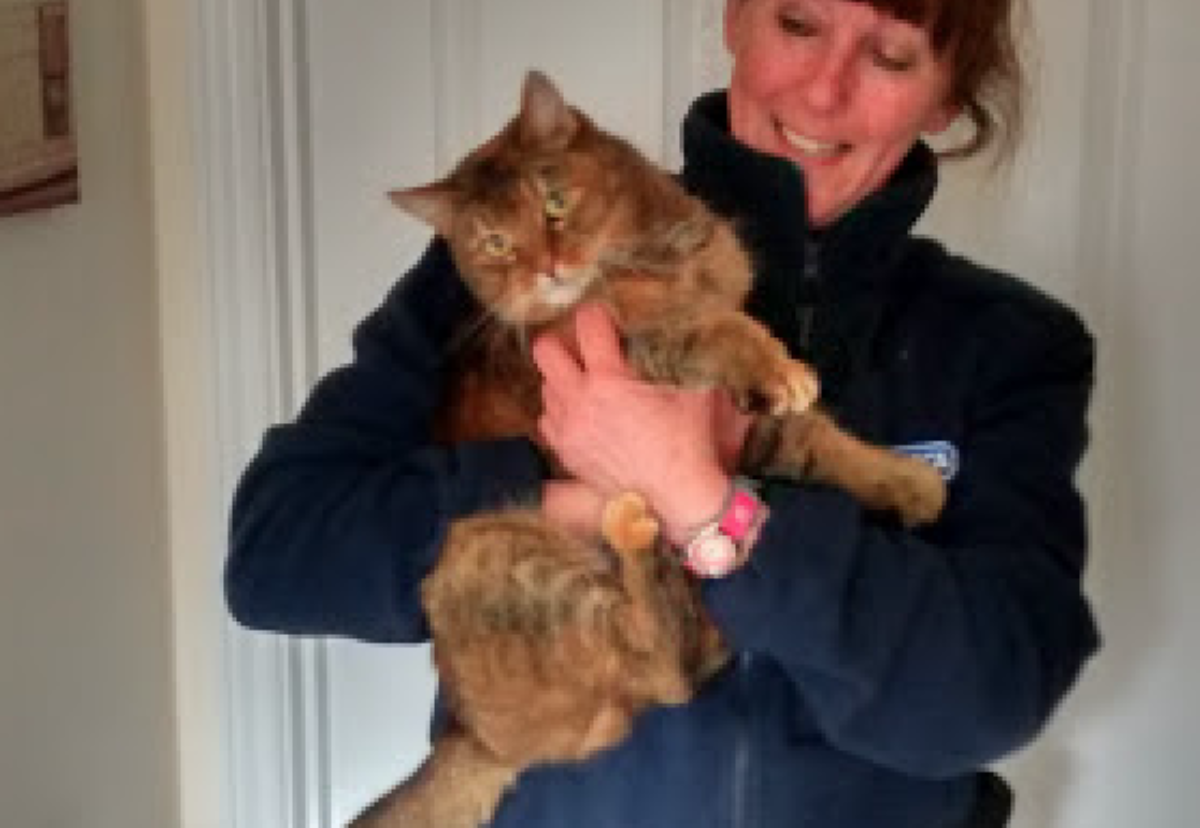 The rescued cat is now safely back at home